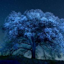 pretty tree at night