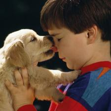 Male child with hearing loss being kissed on the nose by puppy.