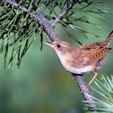 You can hear a bird singing, like this one in the tree, with ITE hearing aids.