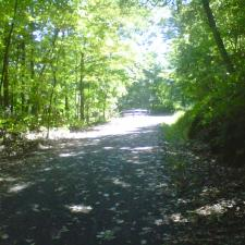 A beautiful trail in the woods can provide noise that distracts from tinnitus, a feature modern hearing aids try to copy.